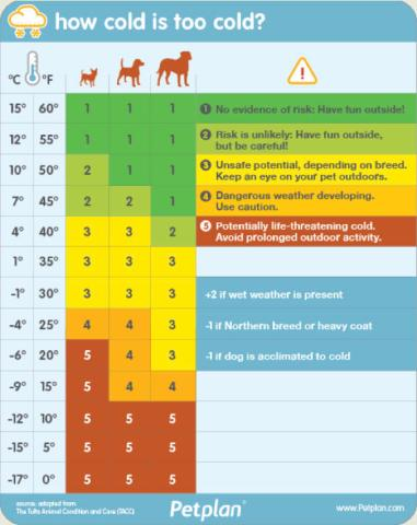 how cold is too cold for your dog